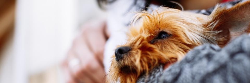Groupe Socialiste du Parlement de Wallonie - Les soins prodigués aux animaux des personnes sans domicile fixe