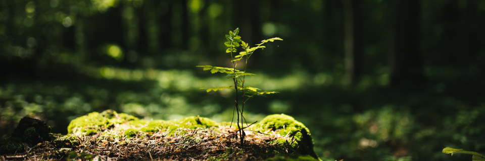 Groupe Socialiste du Parlement de Wallonie - 3 millions d'euros pour diversifier les forêts wallonnes